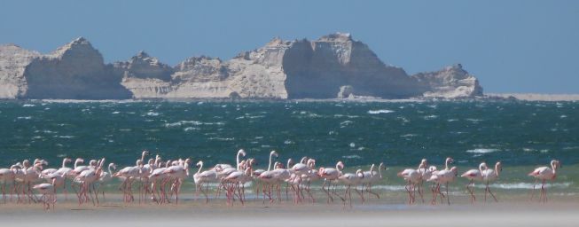 Flamants roses_2