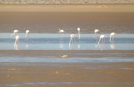 Flamants roses_3